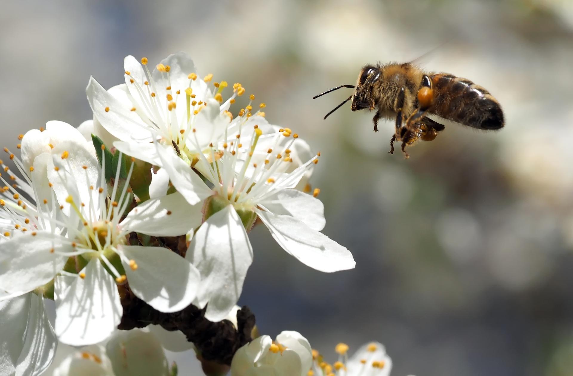 Trend u ekspanziji: Urban beekeeping